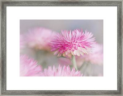Cotton Candy Framed Print by David and Carol Kelly