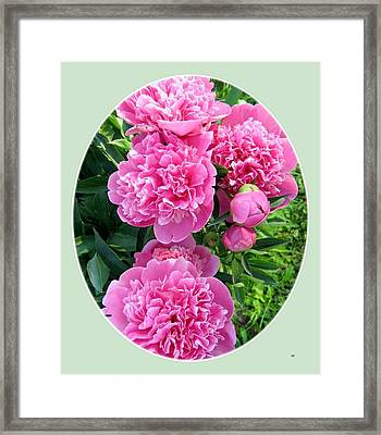 Country Peonies Framed Print