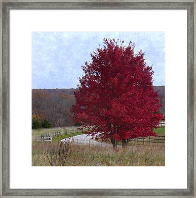 Country Roads Framed Print by Deena Stoddard