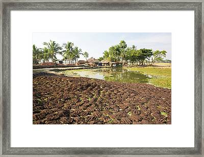 Cow Dung Belonging To Subsistence Farmers Framed Print by Ashley Cooper