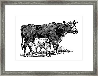 Cows, 19th Century Framed Print by Granger