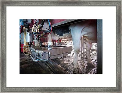 Cow's Udder In Milking Machine Framed Print