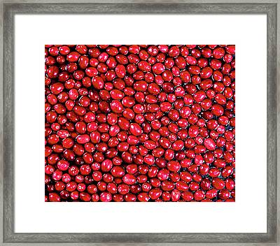Cranberries Floating In Water Framed Print