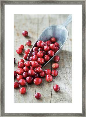 Cranberries Framed Print by Gustoimages