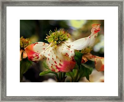 Cranberry Dogwoods Framed Print by Karen Wiles