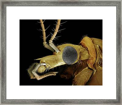 Crane Fly Framed Print by Clouds Hill Imaging Ltd