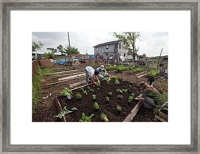 Creating Community Garden Framed Print by Jim West