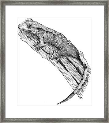 Crested Gecko Framed Print by Roger Hall