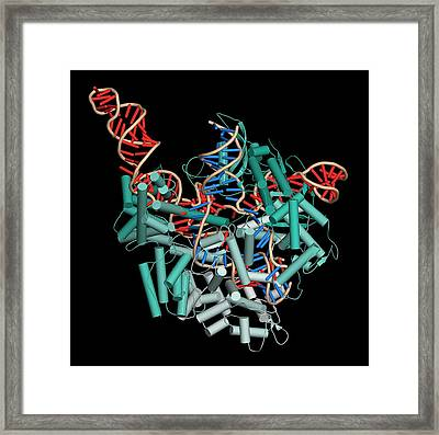 Crispr-cas9 Gene Editing Complex Framed Print by Molekuul