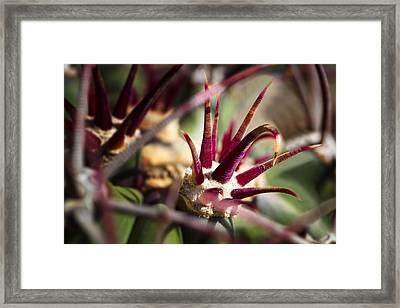 Crown Of Thorns Framed Print by Kelley King