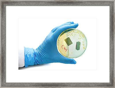 Cultured Urinary Bacteria Framed Print by Aberration Films Ltd