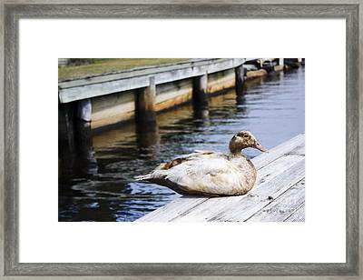 Cute Brown Duck Sitting On A Wooden Pier Framed Print by Jorgo Photography - Wall Art Gallery