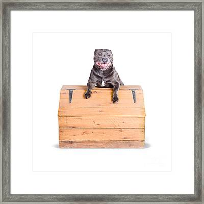 Cute Dog On Vintage Wooden Chest Framed Print by Jorgo Photography - Wall Art Gallery