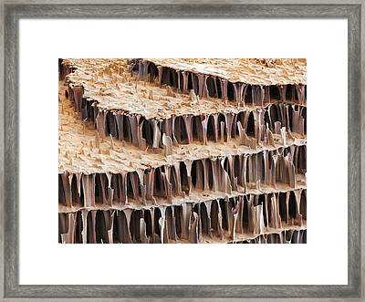 Cuttlefish Bone, Sem Framed Print by Power And Syred