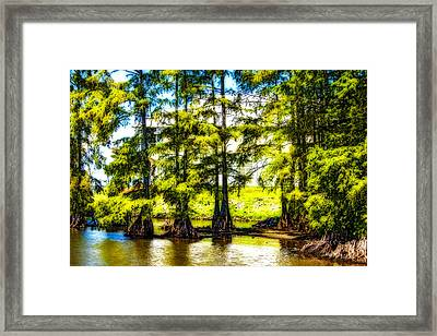 Cypress Point Framed Print
