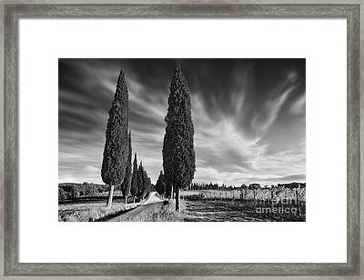 Cypress Trees- Tuscany Framed Print by Rod McLean