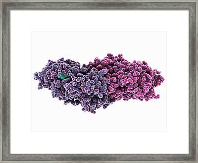 D-amino Acid Oxidase Enzyme Framed Print by Laguna Design