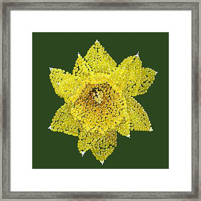 Daffodil Bedazzled Framed Print by R  Allen Swezey