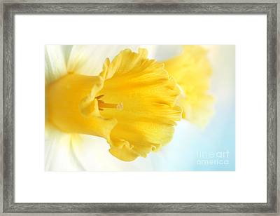 Daffodil Close Up Framed Print