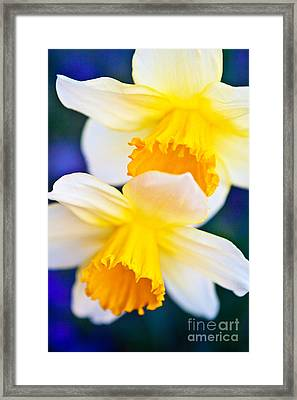 Framed Print featuring the photograph Daffodils by Roselynne Broussard