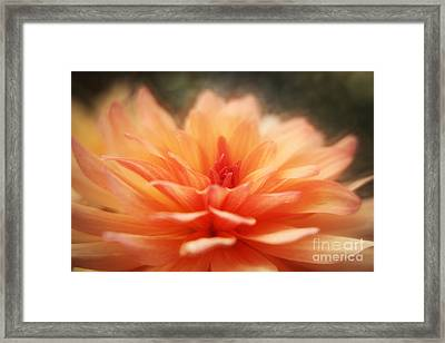 Dahlia Blooming Framed Print by LHJB Photography
