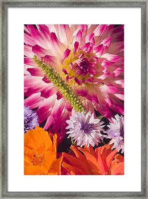 Dahlia Zinnia Bachelor's Buttons Flowers Framed Print