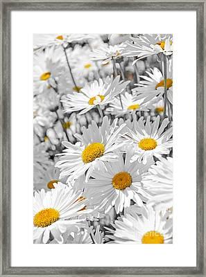 Daisies In Garden Framed Print by Elena Elisseeva