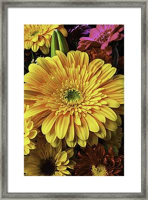 Daisy Bouquet Framed Print by Garry Gay
