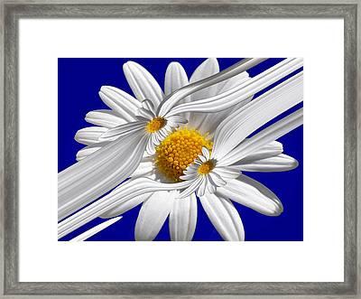 Daisy Delight Framed Print
