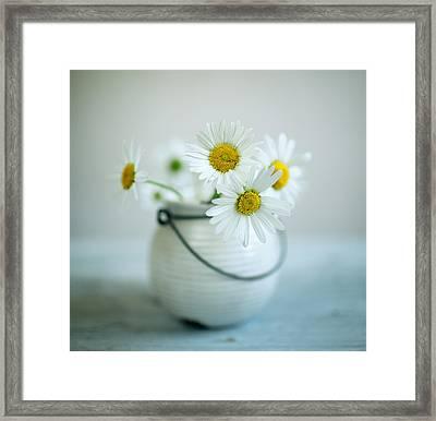Daisy Flowers Framed Print