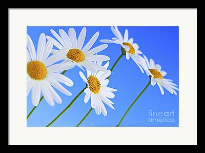 Yellow Wild Flowers Framed Prints