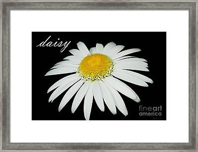 Daisy Framed Print by MaryJane Armstrong