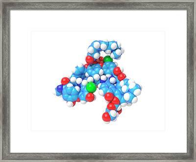 Dalbavancin Antibiotic Molecule Framed Print by Indigo Molecular Images