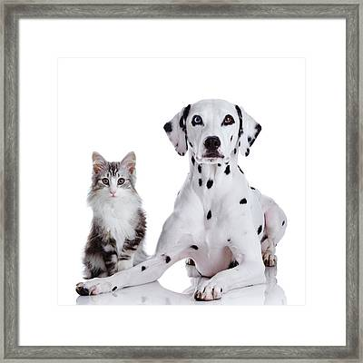 Dalmatian Dog And Norwegian Forest Cat Framed Print by Tetsuomorita