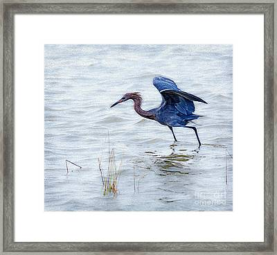 Dancing Egret Framed Print by Louise Heusinkveld