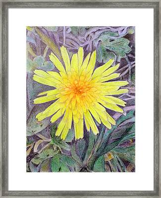 Dandelion Framed Print by Linda Pope