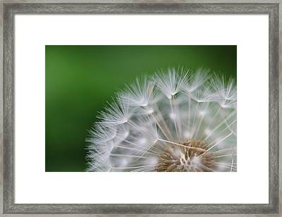 Dandelion Framed Print by Tilen Hrovatic
