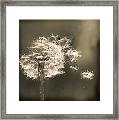 Framed Print featuring the photograph Dandelion by Yulia Kazansky