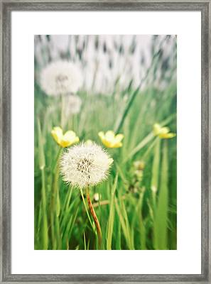 Dandelions And Buttercups Framed Print