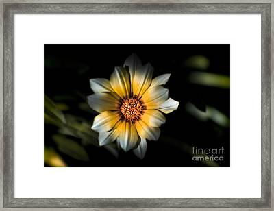 Dark Daisy Flower Framed Print by Jorgo Photography - Wall Art Gallery