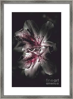 Dark Fine Art Azalea Flowers In Nights Shadow Framed Print by Jorgo Photography - Wall Art Gallery