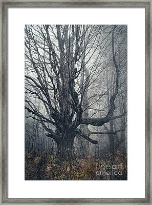 Dark Forest Framed Print by HD Connelly