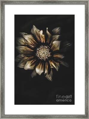 Dark Grave Flower By Tomb In Darkness Framed Print