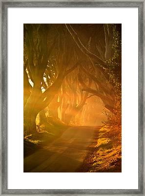 Dark Hedges  Framed Print by Pawel Klarecki