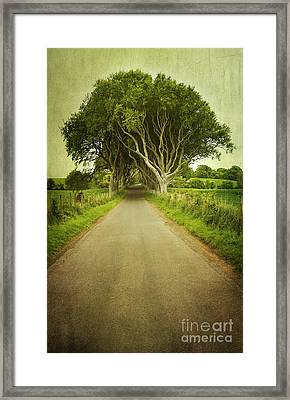 Dark Hedges Framed Print by Svetlana Sewell