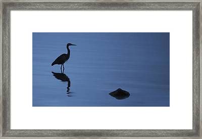 Dark Heron Framed Print
