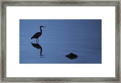 Dark Heron Framed Print by Timothy Hack