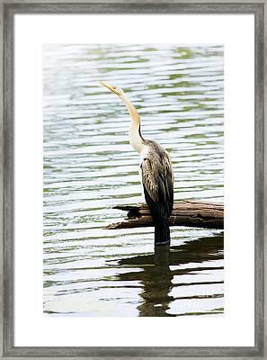 Darta Framed Print