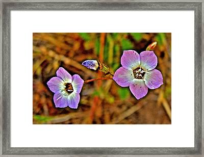 Davy Gilia In Park Sierra Near Coarsegold-california Framed Print by Ruth Hager