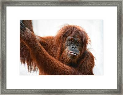 Daydreamer Framed Print by Joachim G Pinkawa